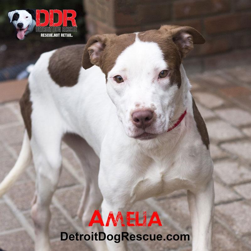 Detroit Pet Adoption Center - Michigan Humane Society