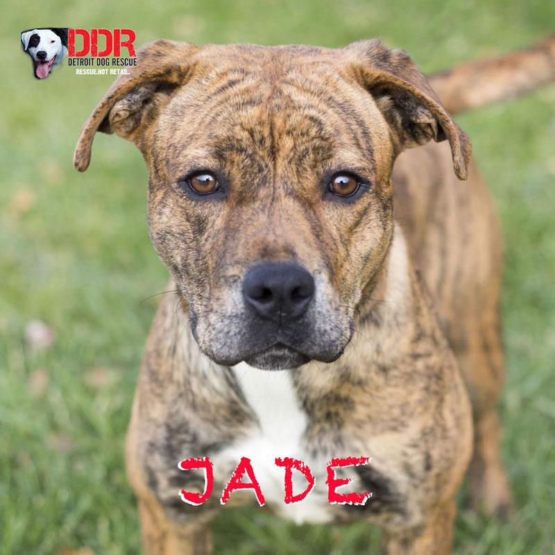 jade-1.jpg