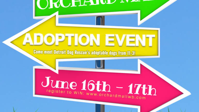 DDR: Adoption Event & Block Party