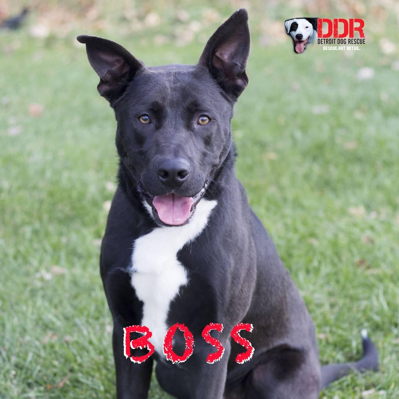 boss-copy-2.jpg