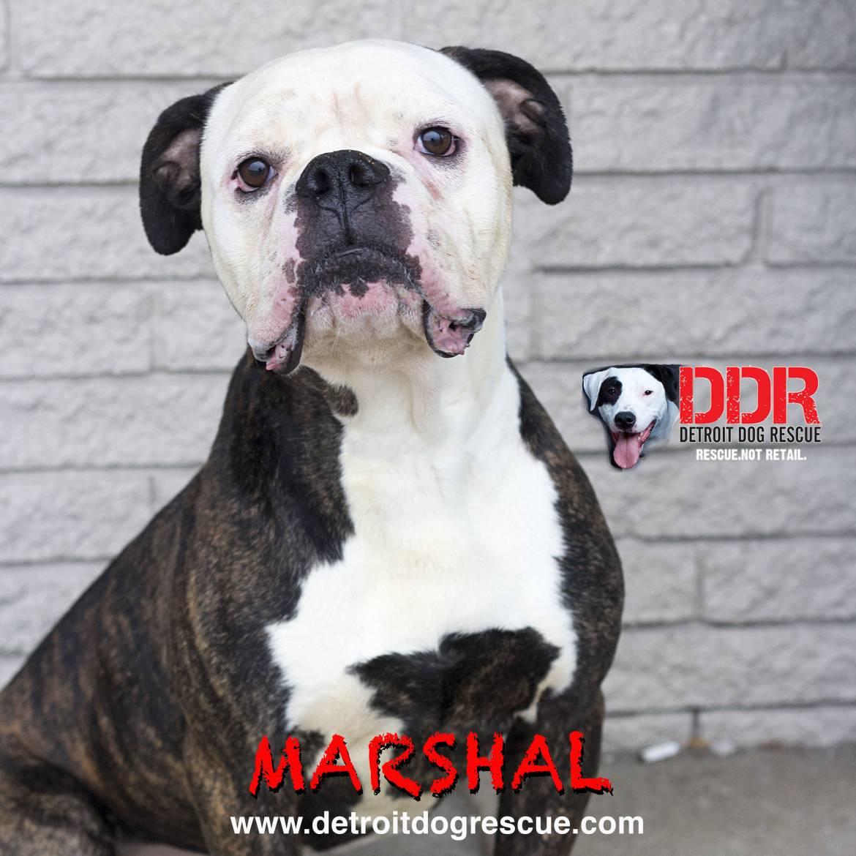 marshal-copy.jpg