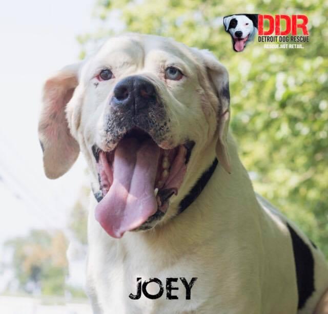 Joey-1.jpg
