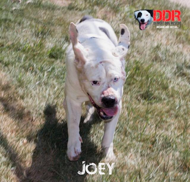 Joey-3.jpg