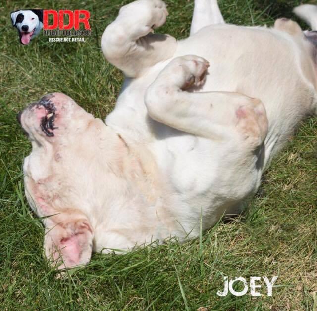 Joey-4.jpg