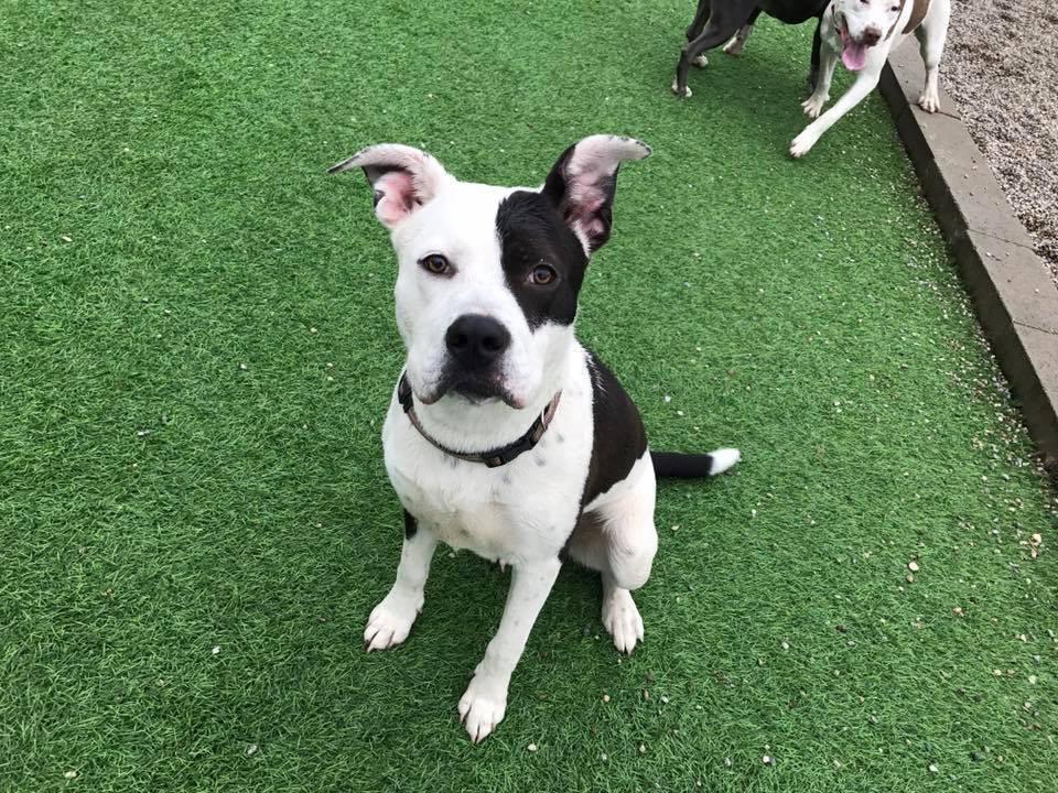 Adopt a Pet in Detroit - michiganhumane.org
