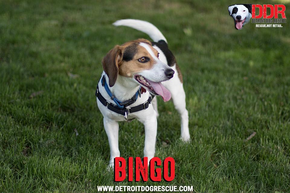 bingo-1-2.jpg