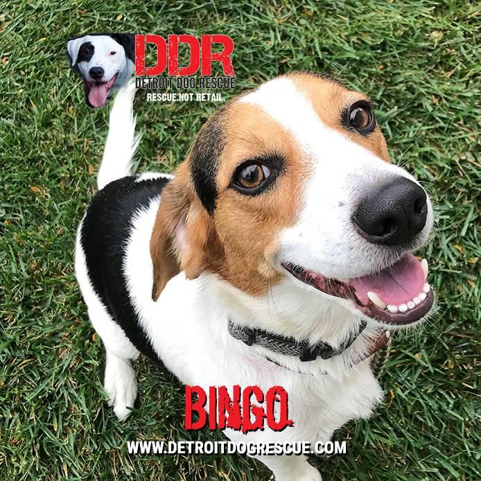 bingo-editthumb-e1525209865237.jpg