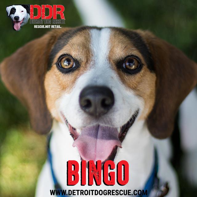 bingo-thumb-1.jpg