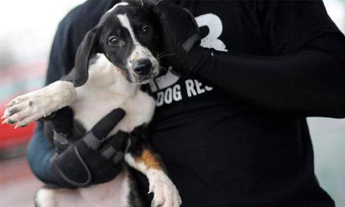 Detroit Dog Rescue