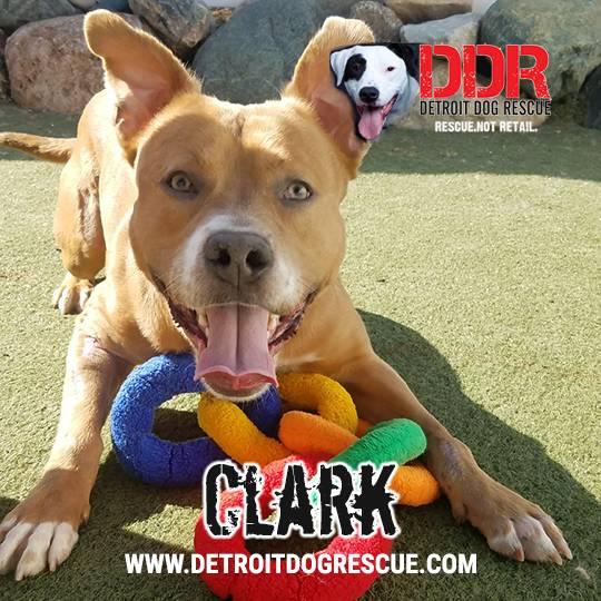 clark-editthumb-e1525211937674.jpg