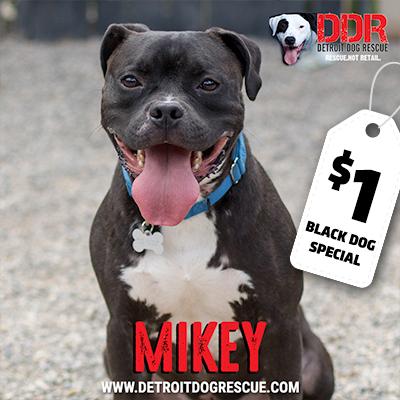 mikey-bdsthumb.jpg
