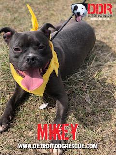 mikey-edit.jpg