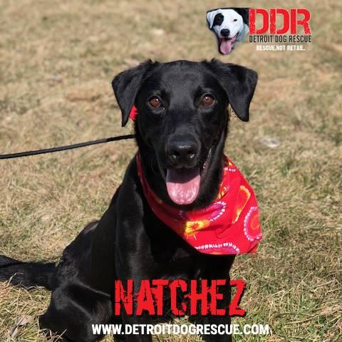natchez-editthumb-e1525211776895.jpg