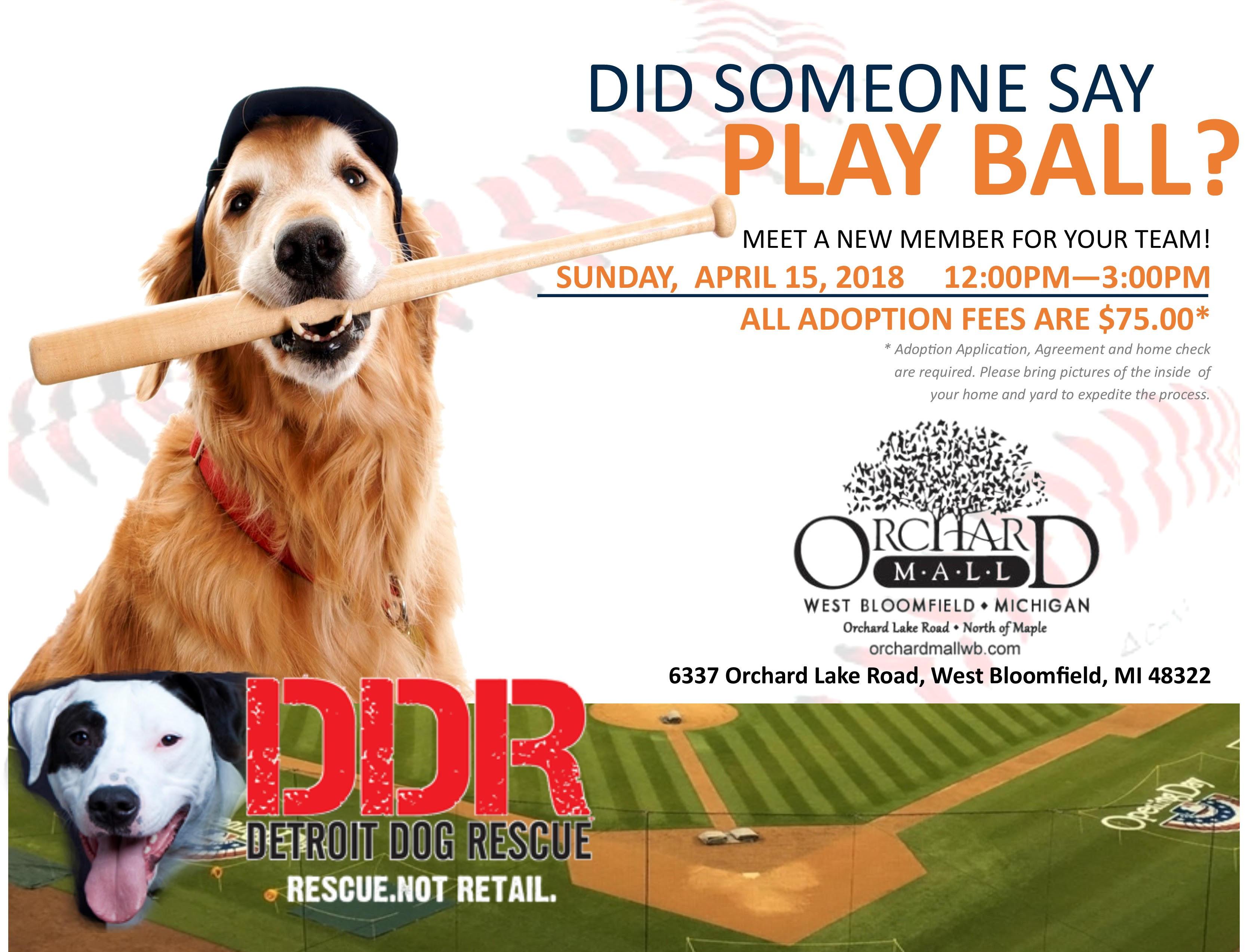 Adopt a dog detroit dog rescue adopt a dog m4hsunfo