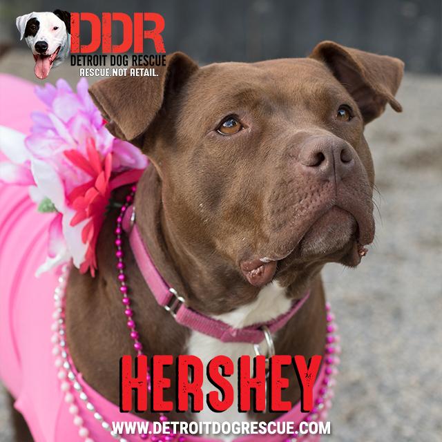 hershey-thumb-2.jpg