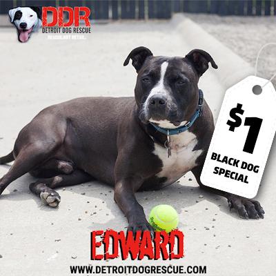 edward-bds.jpg