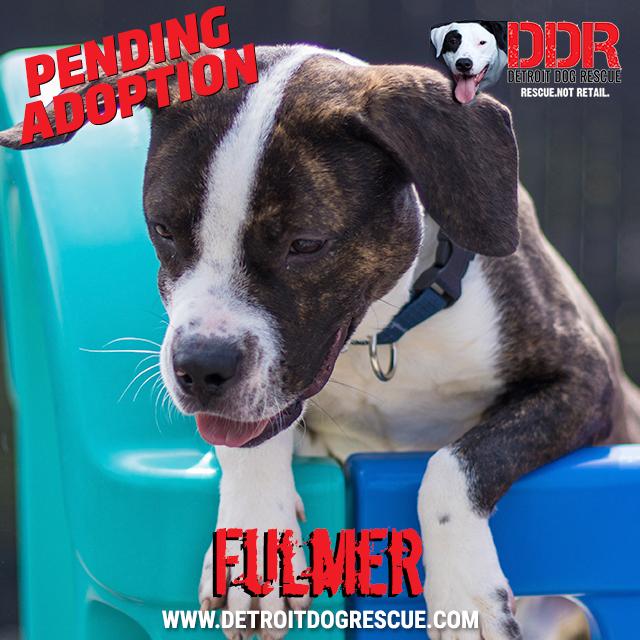 fulmer-pending.jpg