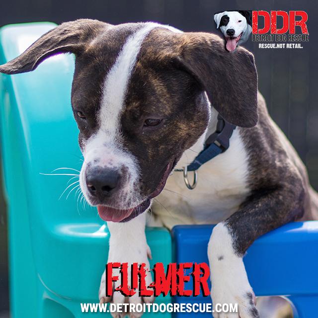 fulmer-thumb.jpg