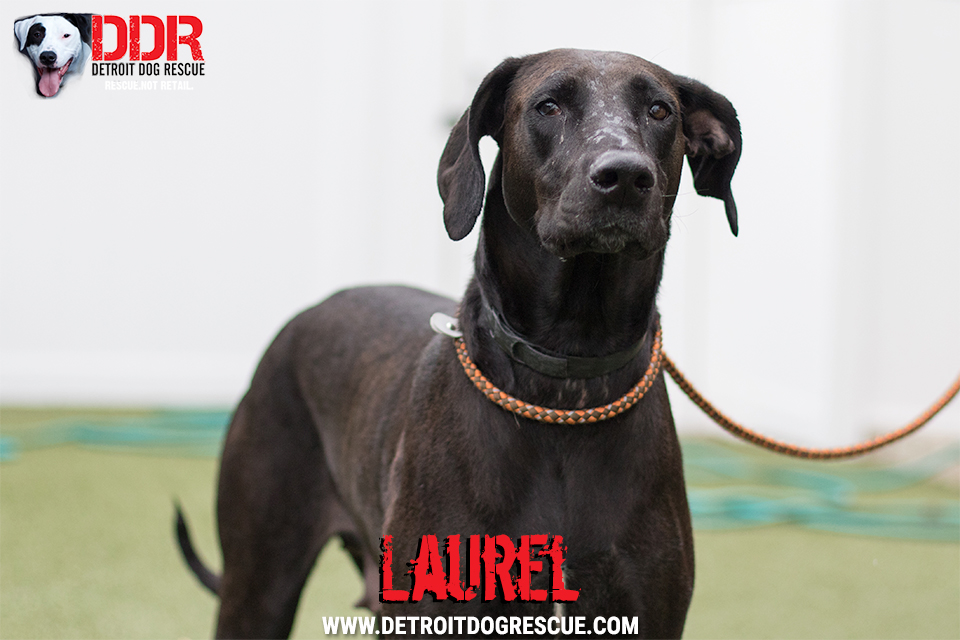 laurel-2.jpg