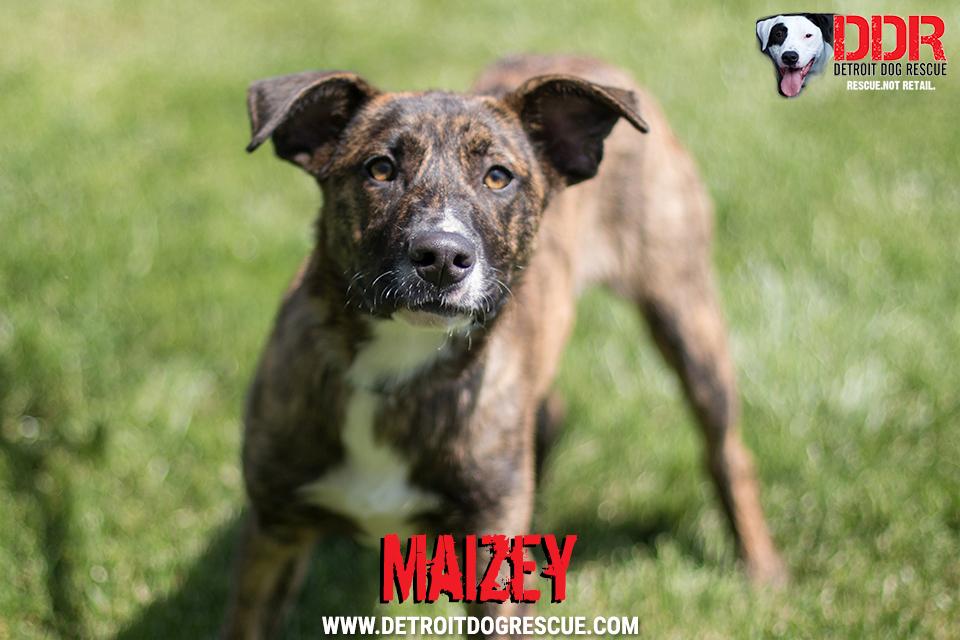 maizey-1-1.jpg