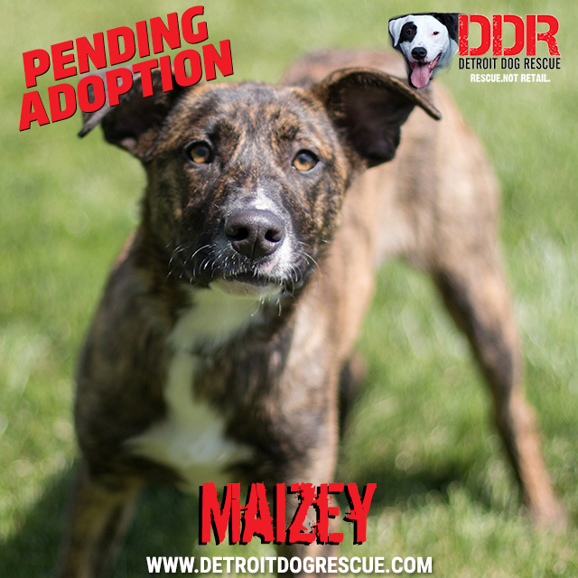 maizey-pending.jpg