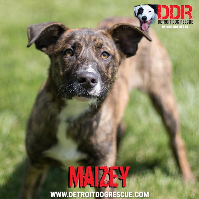 maizey-thumb-1.jpg