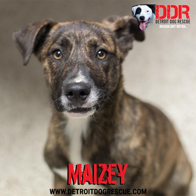 maizey-thumb.jpg