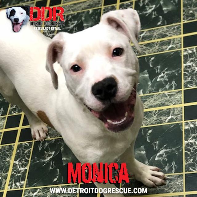 monica-thumb.jpg