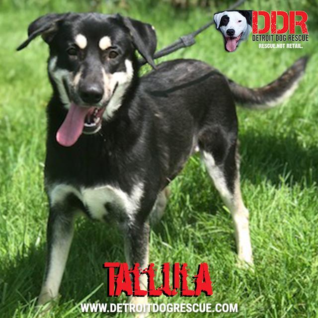 tallula-thumb.jpg