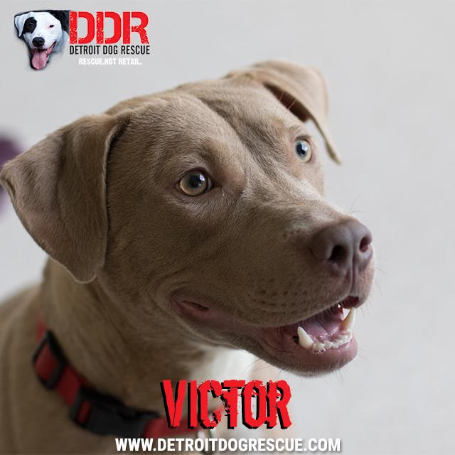 victor-thumb.jpg