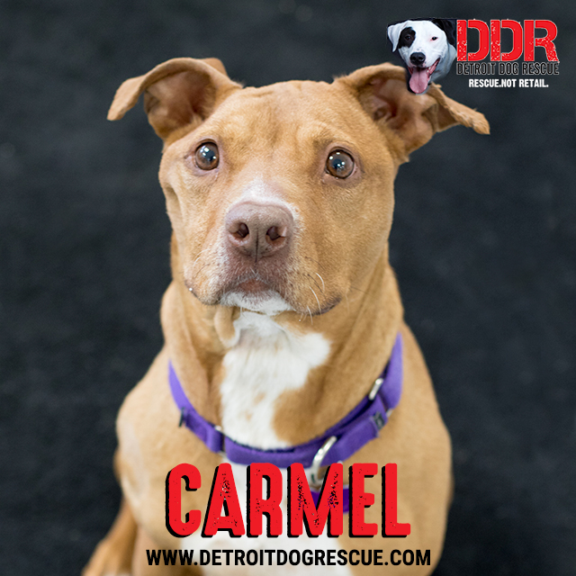 carmel-thumb-1.jpg