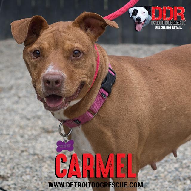 carmel-thumb-2.jpg