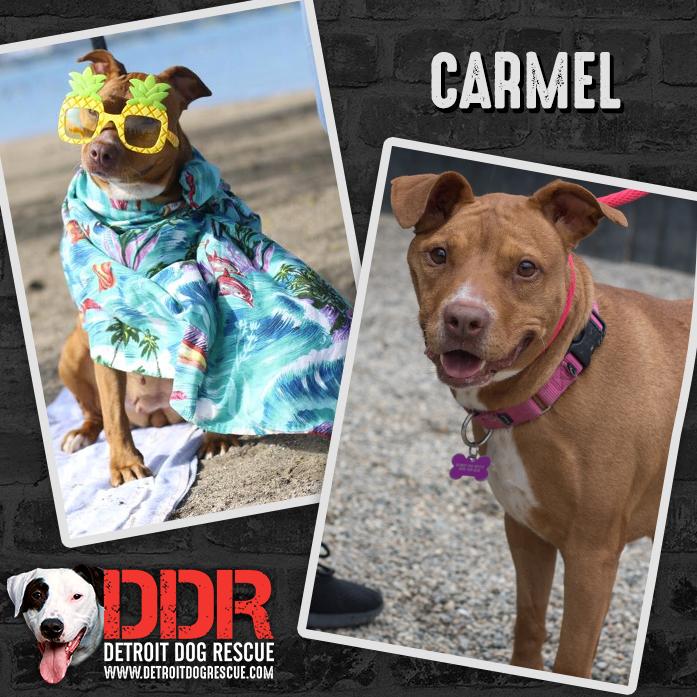 carmel-thumb-3.jpg