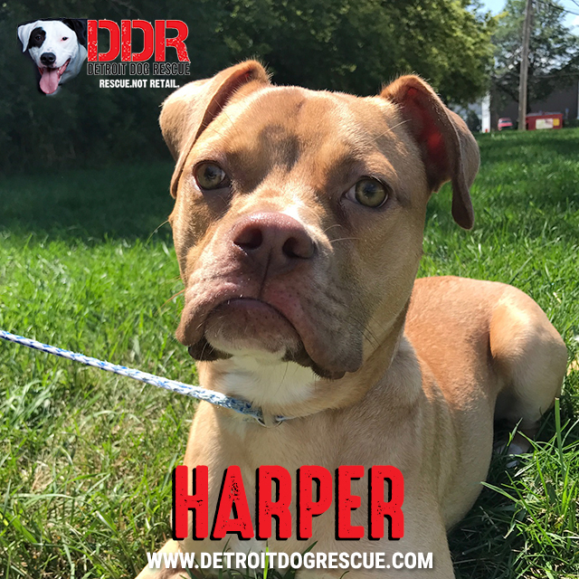 harper-thumb.jpg