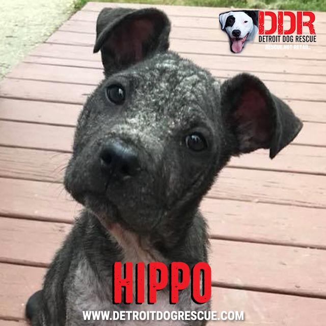 hippo-thumb.jpg