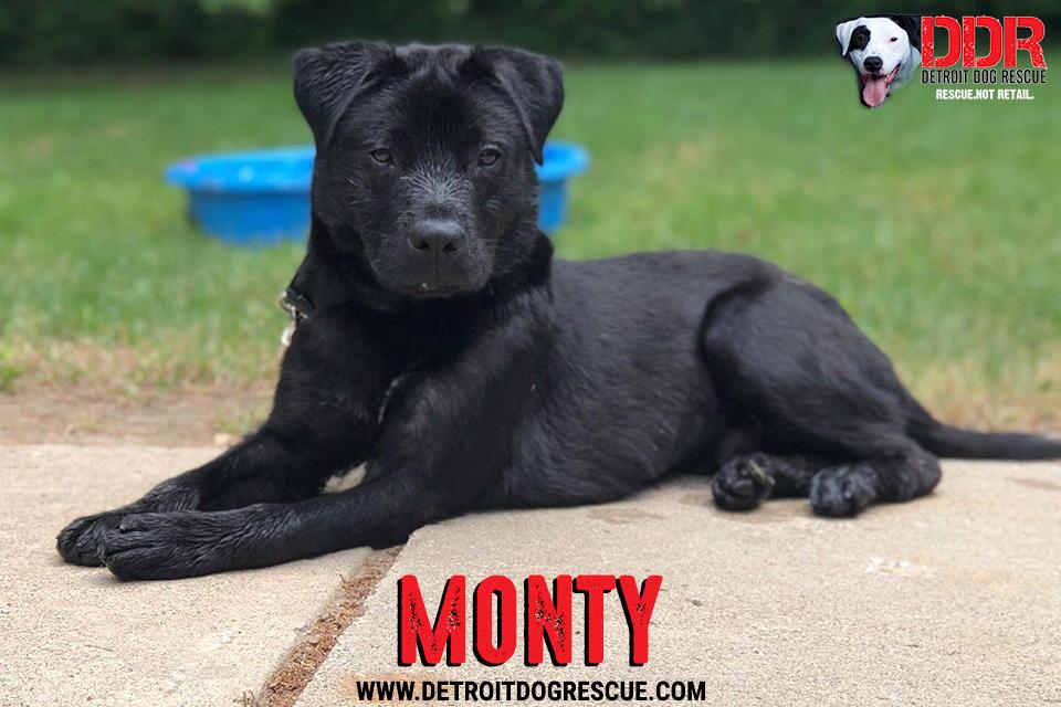 monty-1.jpg