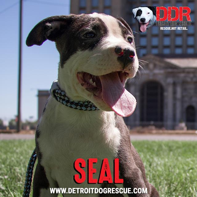 seal-thumb-1.jpg