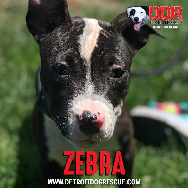 zebra-thumb.jpg