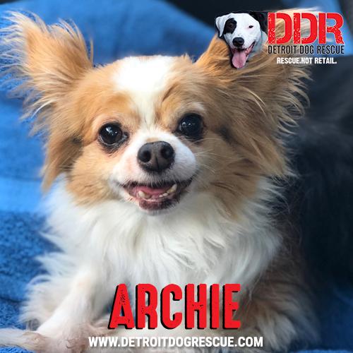 archie-1.jpg