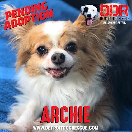 archie-pending.jpg