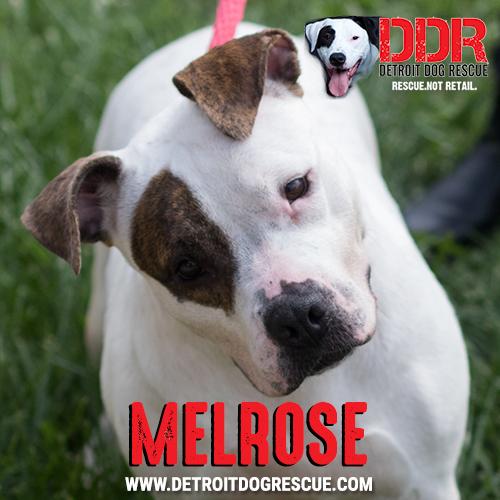 melrose-thumb.jpg