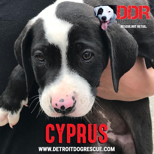 cyprus-thumb.jpg