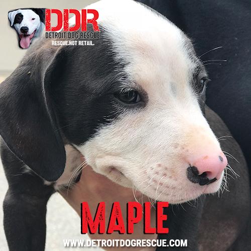 maple-thumb-1.jpg