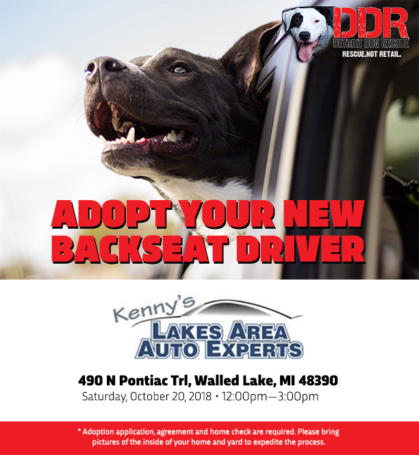 Adoption Event @ Kenny's Lakes Area Auto Experts