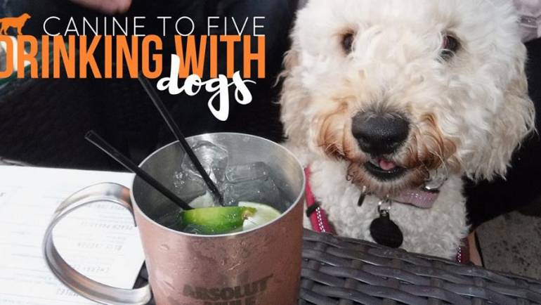 Canine to Five