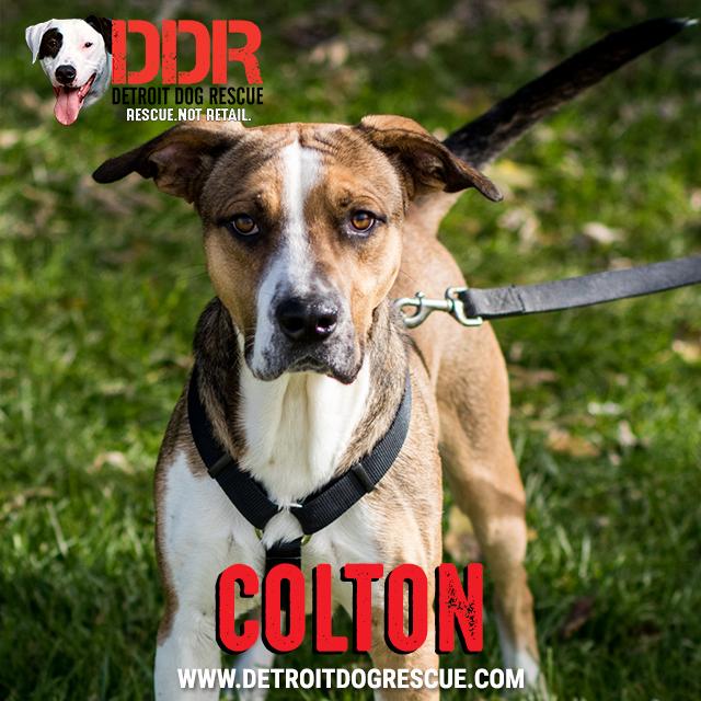 colton-thumb.jpg