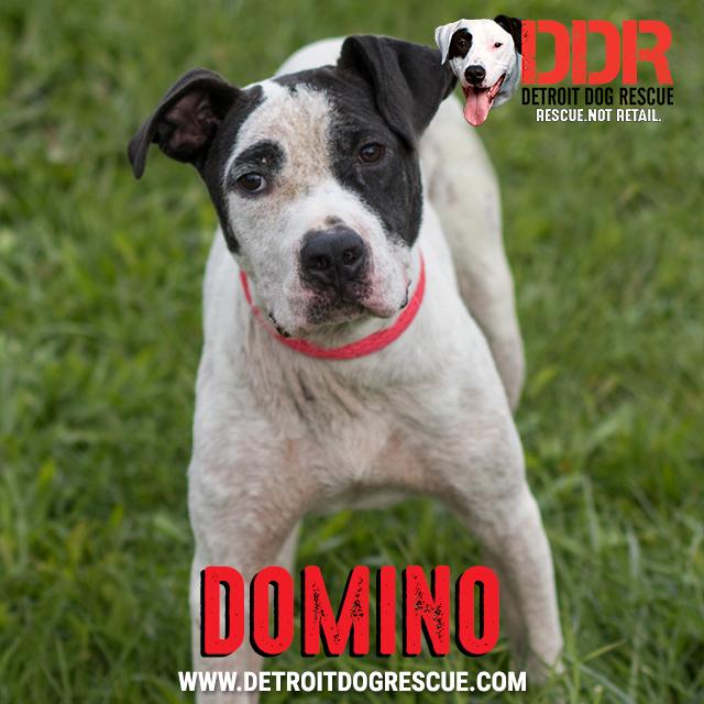 domino-thumb.jpg
