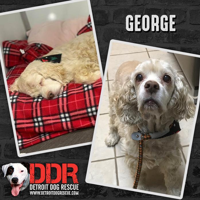 george-thumb-1.jpg