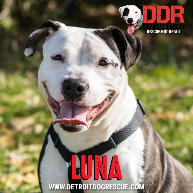 luna-thumb.jpg