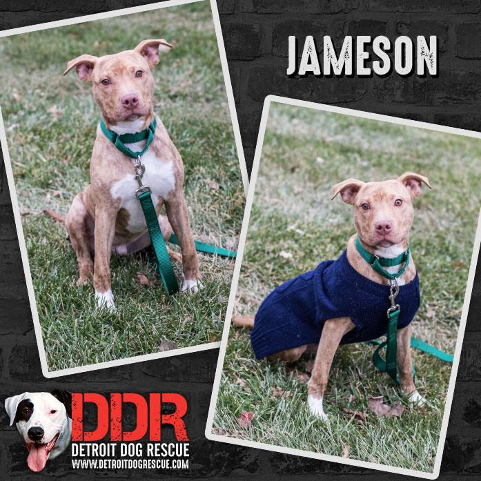 Jameson-thumb.jpg